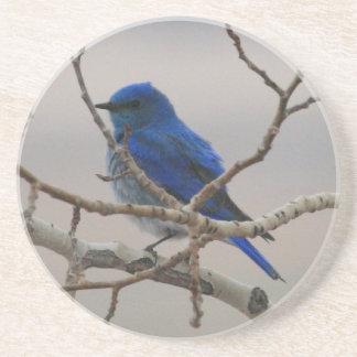 Mountain Bluebird Coaster