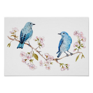 Mountain Bluebirds on Sakura Branch Poster