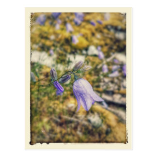 Mountain Flower Postcard