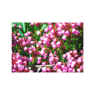 Mountain Flowers Canvas Print