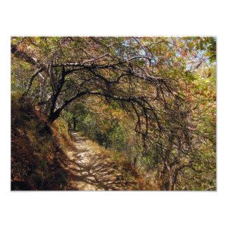 Mountain Forrest Passage Photo Print