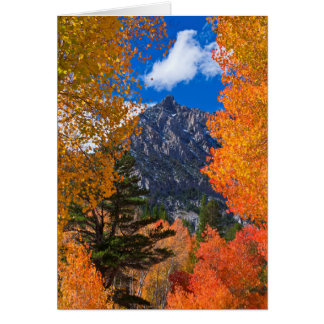 Mountain framed in fall foliage, CA Card