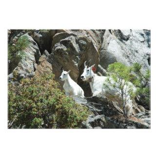 Mountain Goat and Kid - Wildlife Photography Photo Print