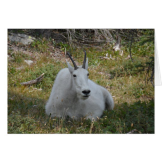 Mountain Goat- Glacier National Park Card