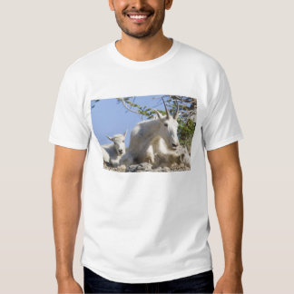 Mountain goat nanny with kid in Glacier National Tees