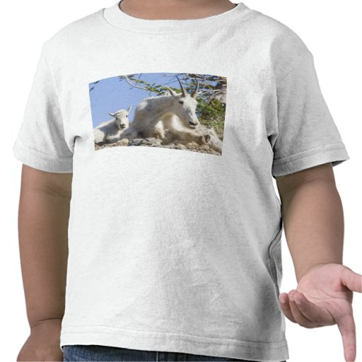 Mountain goat nanny with kid in Glacier National T-shirts