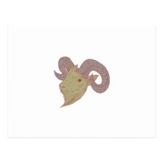 Mountain Goat Ram Head Drawing Postcard