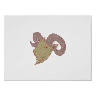 Mountain Goat Ram Head Drawing Poster