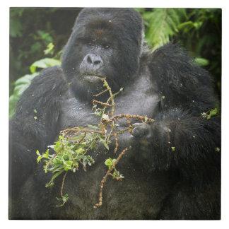 Mountain Gorilla and aging Silverback 2 Tiles
