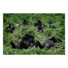Mountain gorilla group poster print