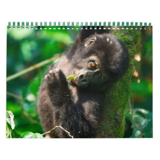 Mountain Gorillas of Uganda Wall Calendars