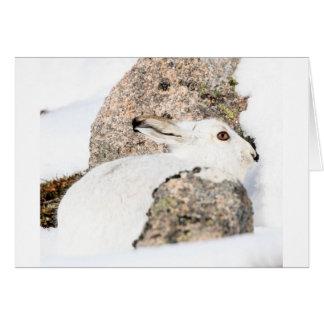 mountain hare card
