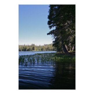 Mountain Lake, Lilly Pads Poster