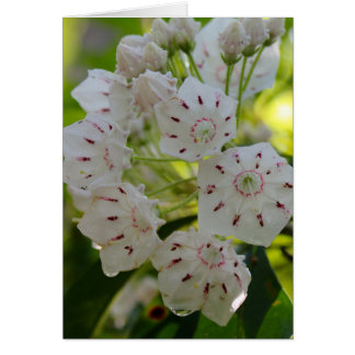 Mountain Laurel, after the rain Card