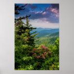 Mountain Laurel at Sunrise Poster