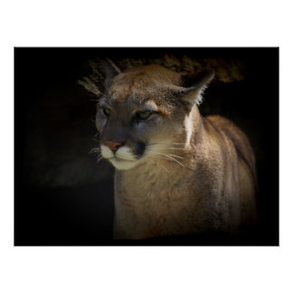 MOUNTAIN LION Cougar Big Cat Wildlife Poster