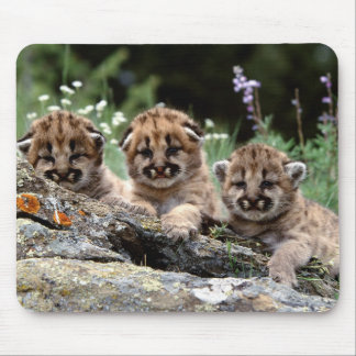 Mountain Lion Cubs Mouse Pad