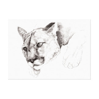 Mountain Lion Drawing Stretched Canvas Print