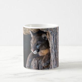 Mountain Lion in cave Basic White Mug