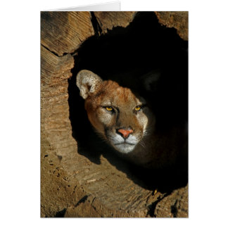 Mountain Lion in Log Card