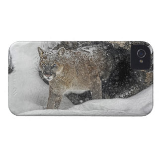 Mountain Lion in Snow iPhone 4 Cases