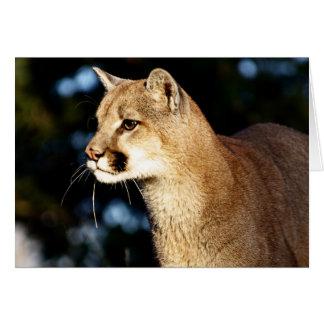Mountain Lion Profile Card