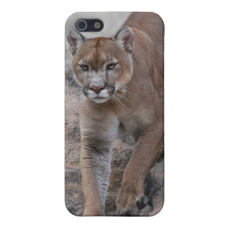 Mountain lion rock climbing iPhone 5/5S cover