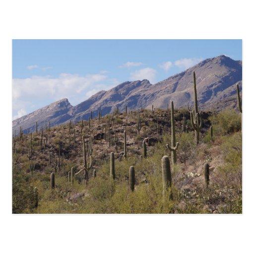 mountain mountains blue sky cactus post card