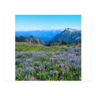 Mountain Purple Heather Haze Postcard