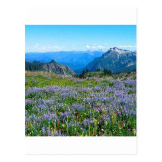 Mountain Purple Heather Haze Post Card