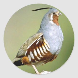 Mountain Quail Classic Round Sticker