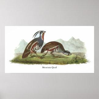 Mountain Quail, John Audubon Poster