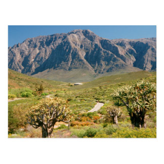 Mountain Range, Worcester Nature Reserve Postcard