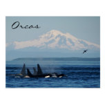 Mountains and Orcas Post Card