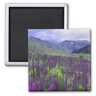 Mountains and wildflowers in alpine meadow, 2 square magnet