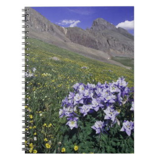Mountains and wildflowers in alpine meadow, Blue Notebooks