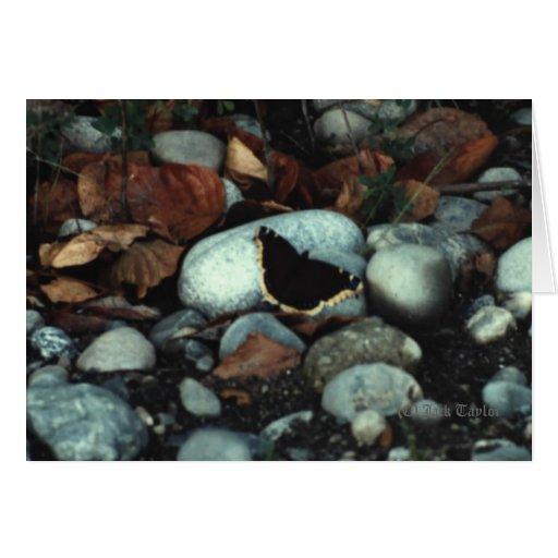 Mourning Cloak #01 Card