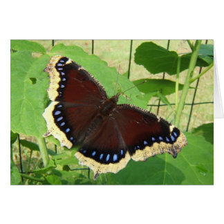 Mourning Cloak butterfly ~ card