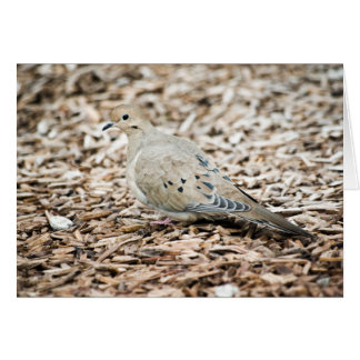 Mourning Dove 1 Card