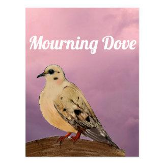 Mourning Dove Backyard Bird on Branch Postcard