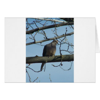mourning dove cards