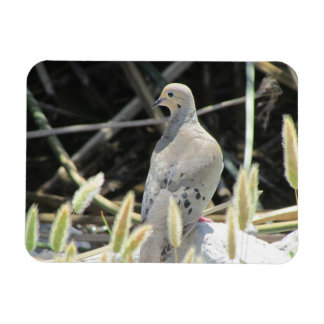 Mourning Dove Flexible Photo Magnet
