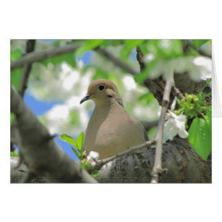 Mourning Dove Greeting or Note Card  #81