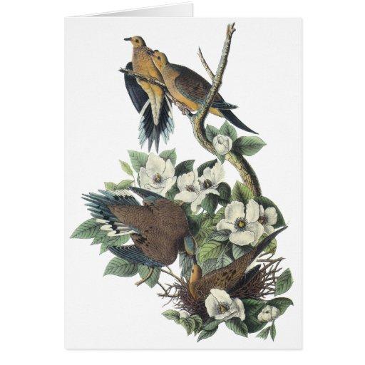Mourning Dove, John Audubon Greeting Cards