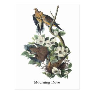 Mourning Dove, John Audubon Postcard