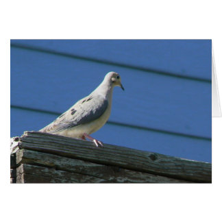 Mourning Dove on Deck Greeting Card
