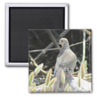 Mourning Dove Photo Magnet