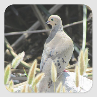 Mourning Dove Stickers