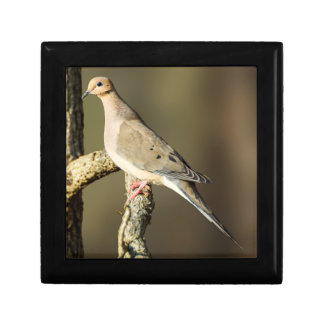 Mourning Dove Wooden Jewelry Keepsake Box
