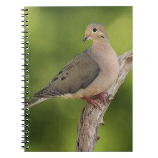 Mourning Dove, Zenaida macroura Notebooks